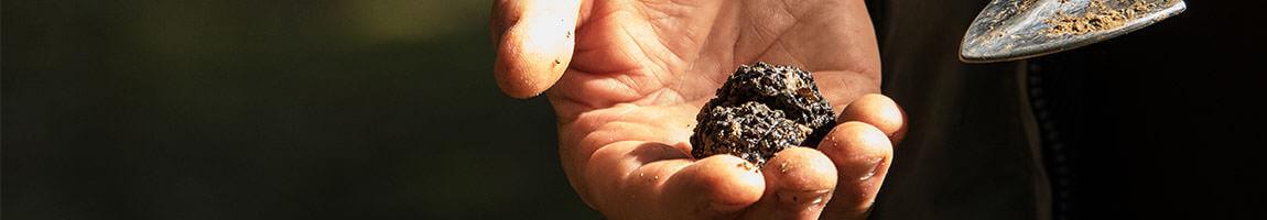 italian truffle specialties